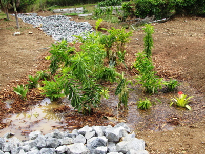 A rain garden installed at Pearl B. Larsen in 2010 with USDA NRCS and VI RC&D.